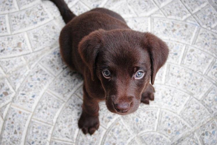 Do Dogs Forgive