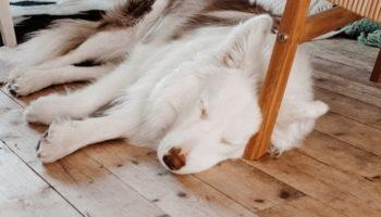 Why Does My Dog Sleep On The Floor? (15 Reasons)