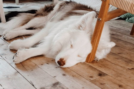 Why Does My Dog Sleep On The Floor? (15 Reasons)