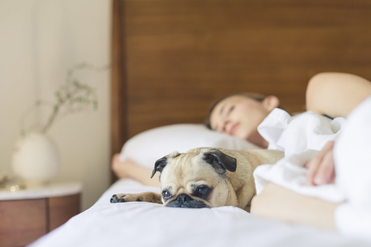 Dogs Like Sleeping With Humans