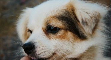Why Does My Dog Nibble On Me? (15 Interesting Reasons)