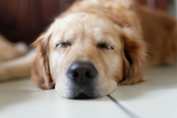 Dog Sleep Between My Legs