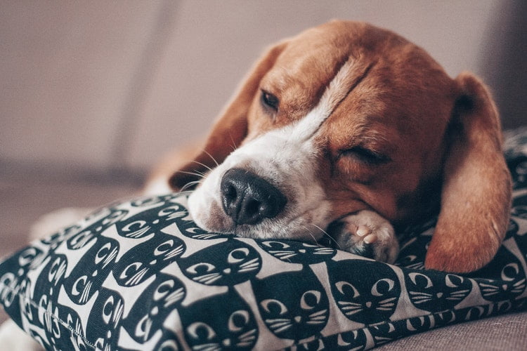 Why Dogs Touch You When They Sleep