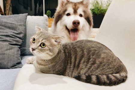16 Helpful Tips On Getting Your Dog And Cat To Get Along