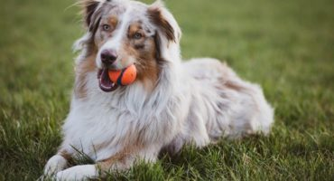 100 Awesome Dog Names Starting With A