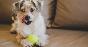 100 Brilliant Dog Names Starting With B