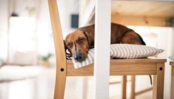 Why Won't My Dog Sleep With Me? (9 Reasons)