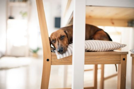 Why Won't My Dog Sleep With Me? (9 Reasons)