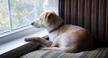 Separation Anxiety In Dogs (Causes, Signs, Tips)