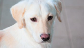 13 Tell-Tale Signs Your Dog Is Mad At You