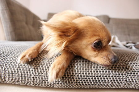 Why Dogs Lay On Your Feet (12 Intriguing Reasons)