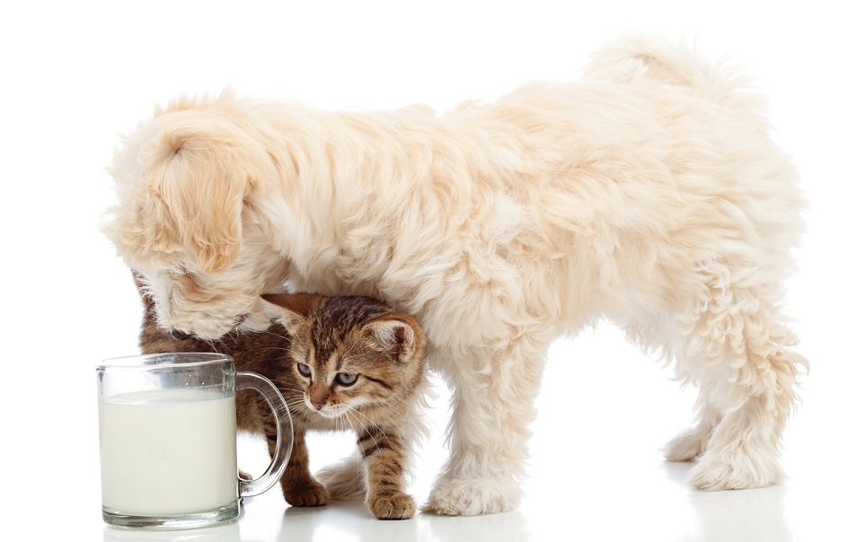 Can Dogs drink milk without problems