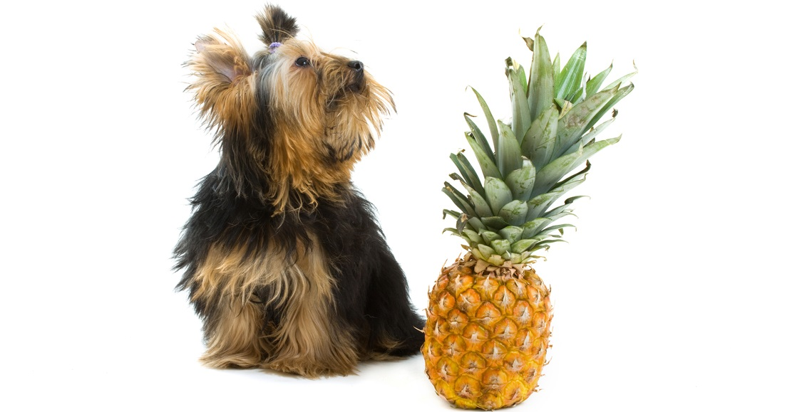 Should dogs have pineapple