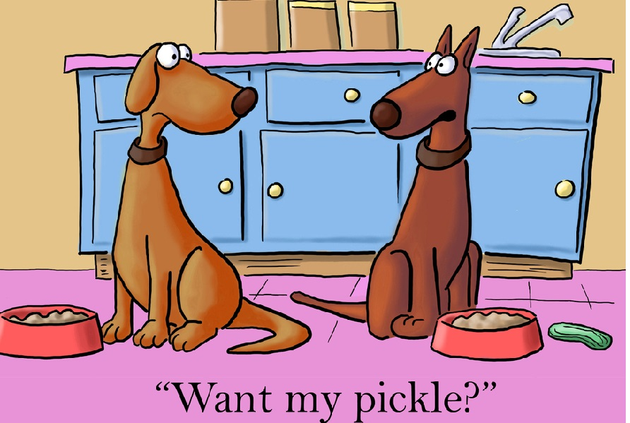 Can your dogs eat pickles
