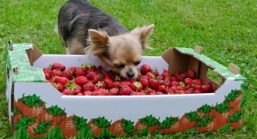 What Fruits Can Dogs Eat? Which Fruit Is Not Safe for your Dog?