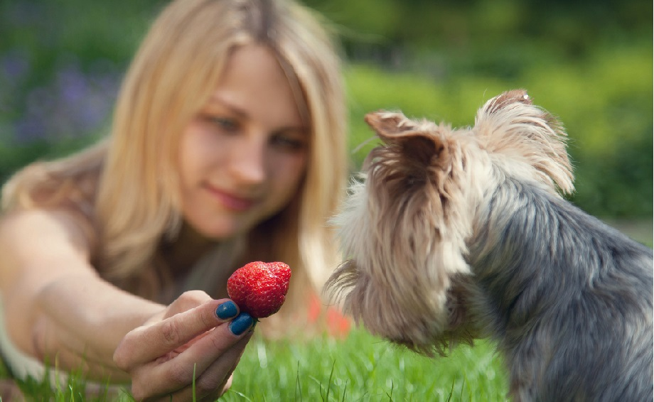 should dogs have fruit