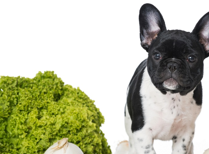 can your puppy eat lettuce